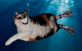 Cat Buy A Boat Meme - my cat finally bought a boat learned to scuba dive cat life imgur