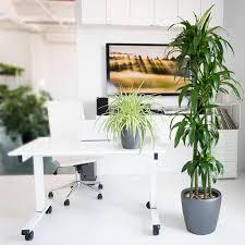 wide selection of healthy indoor plants shop online my city plants