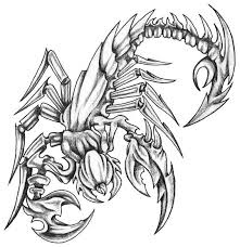grey scorpion skeleton tattoo design