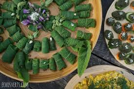 cuisine plantes sauvages reconnaissance et cuisine des plantes sauvages mon stage à la