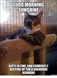Good Morning Cat Meme - 25 best memes about good morning cat meme good morning cat memes