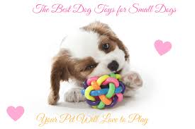 the best dog toys for small dogs your pet will love to play 2017