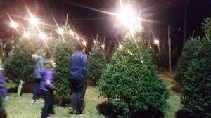 dave u0027s maine christmas trees and wreaths lynchburg virginia