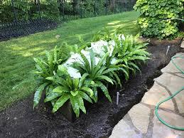 Eugenia Topiary May 2017 Dirt Simple