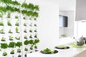 kitchen awesome indoor herb garden kit walmart interesting pins