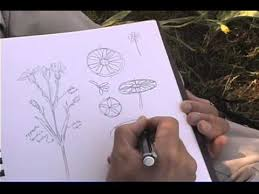 how to sketch wildflowers and plants youtube