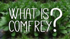 east texas native plants what is comfrey learn about it here u003c u003c east tx homestead