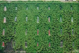 low light outdoor plants ivy house plants darxxidecom