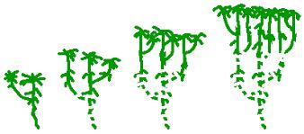 Vegetative Propagation By Roots - vegetative reproduction bryophyte