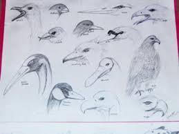 my 1st bird sketches