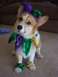 Small Dog Halloween Costumes Ideas 399 Spooky Pet Costumes Images Pet Costumes