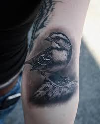 realistic bird tattoo by black 13 tattoo