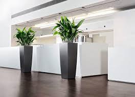 plante bureau plante interieur pour plante interieur bureau élégant modern