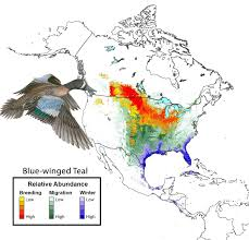 Hummingbird Migration Map Blue Winged Teal State Of North America U0027s Birds 2016