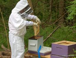 How To Make A Top Bar Beehive How To Start A Honey Bee Farm Countryside Network
