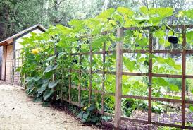 uplighting to grow fruit on trellises the ellsworth americanthe