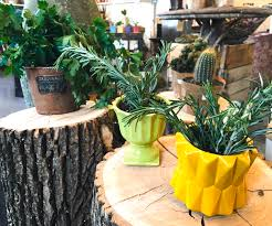 start spring inside with container herbs inforum