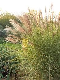 Home And Garden Design Tool by Garden Design With Archaic Landscape Planning Masterplan Austen