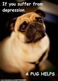 Depressed Pug Meme - 088b99b860ec7750e349d7af8f809698 jpg