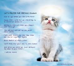 grieving the loss of a pet loss of cat prayer cat s prayer for grieving humans i believe