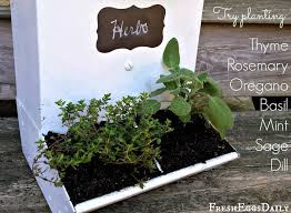 repurposed metal chicken feeder into an herb planter fresh eggs