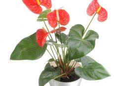 top house plants health benefits of houseplants hgtv
