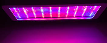 best led grow lights high times 2017 the best led grow lights for extraordinary cannabis the chill bud