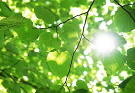 discover feedback mechanism in photosynthesis that protects plants