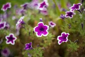 all purpose fertilizer recipe for flowering plants home