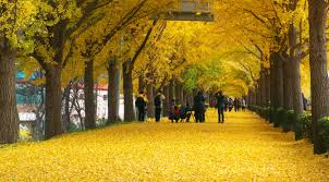 of china tree china s oldest resident the ginkgo tree china icons your guide