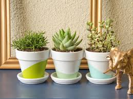 Home Plant Decor by Low Maintenance Plants For Dorm Rooms Hgtv