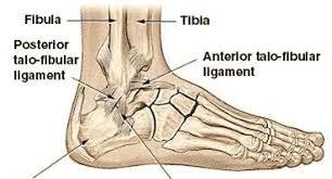 Ankle Anatomy Ligaments Ankle Diagram Bones Anatomy Organ