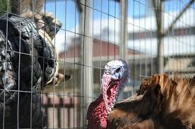 petting zoo picture of thanksgiving point lehi tripadvisor