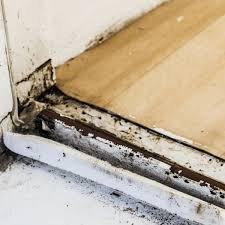 Getting Rid Of Mold In Basement by 127 Best Expert Tips Images On Pinterest Limes Cleaning And