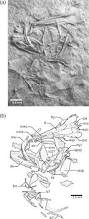 Brr Placements A New Late Cretaceous Turonian Basal Euteleostean Fish From Lac