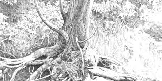 40 incredible pencil drawings of nature you have never seen before