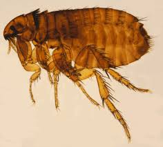 7 ways to get rid of fleas and ticks on your minnesota property in