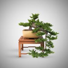 bonsai tree 3d cgtrader