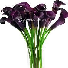 purple calla lilies bulk flowers purple mini callas