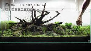 aquascaping layouts with stone and driftwood an ada 120 p layout using manten stone and tx select driftwood