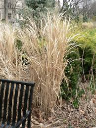 Tall Grass Landscaping by Blog Landscaping Ann Arbor Mi Part Outdoor Landscape Garden At