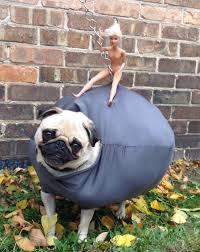 Benson Dog Meme - chewing darwin dogs