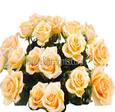 wholesale roses wholesale roses by variety wholesale roses online wholesale