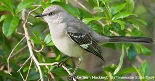 Tennessee birds images Tennessee wild birds wild bird co bird feeding watching jpg