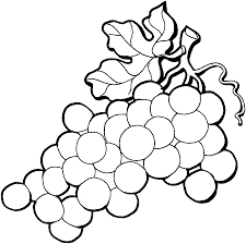 drawn grapes art pencil and in color drawn grapes art