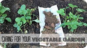 Small Backyard Vegetable Garden Ideas by Garden Design Garden Design With Tips For Starting A Vegetable