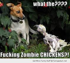 Fucking Funny Memes - fucking zombie chickens funny meme