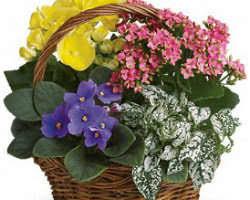 san diego flowers 10 best florists in san diego ca flowers delivery service