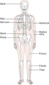 what are the organ systems of the human body video u0026 lesson