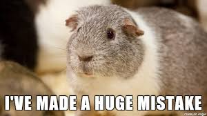 Guinea Pig Meme - randy the guinea pig upon learning he will be the father of 400